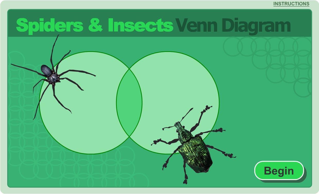 1st grade science learning activity insects and spiders