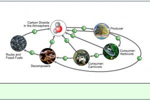 4t-5th Grade Science Carbon Cycle