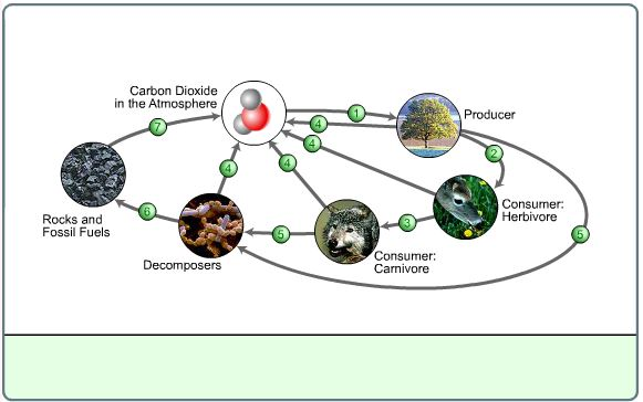4th5th Grade Science Learning Activity The Carbon Cycle – Carbon Cycle Diagram Worksheet