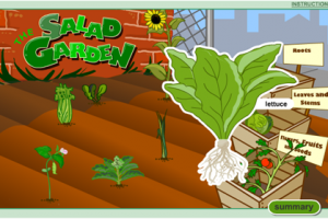 Kindergarten Science: Salad Garden