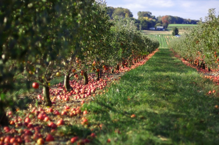 Johnny Appleseed Day Honors Real Man, Not Myth