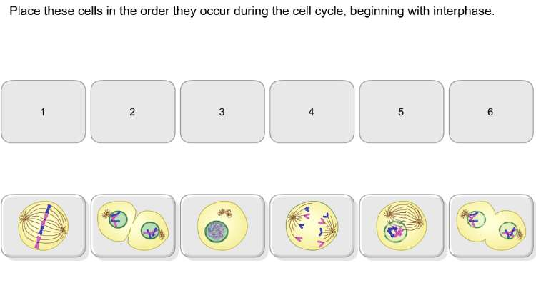 Mitosis Worksheet High School Templates and Worksheets – Mitosis Worksheet and Diagram Identification Answer Key