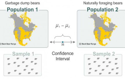 Bears Confidence Interval