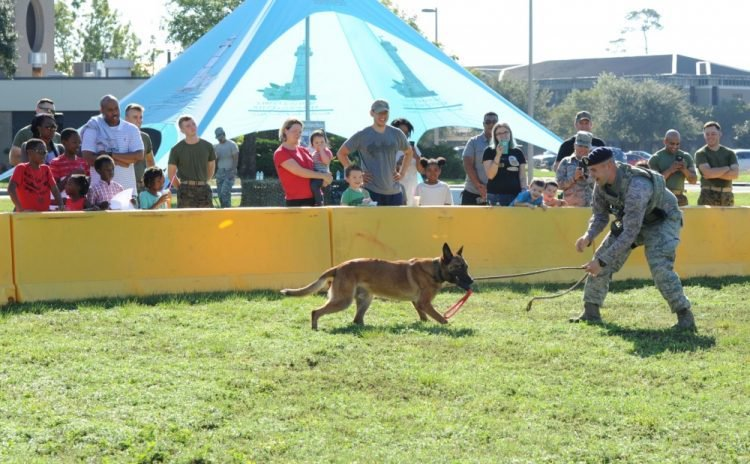 event with dog training
