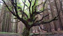 The 'Tree of Life' Project Teaches Biology in a New ..
