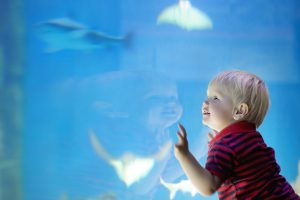 Toddler at aquarium