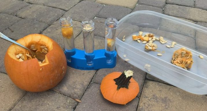 open pumpkin with test tubes and tray