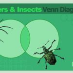 1st Grade Science Insects and Spiders