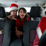 posed photo of pets driving a car with people in backseat