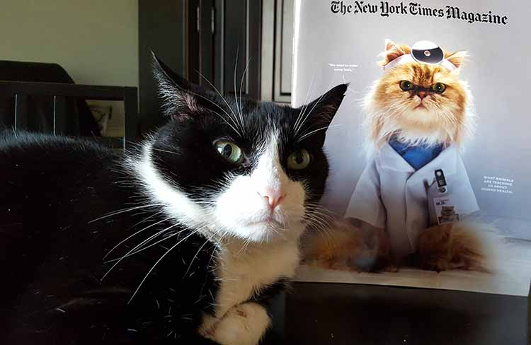 Cat in front of NYT Magazine with Cat photo