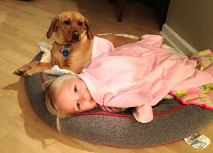 Dog looking at child in dog bed