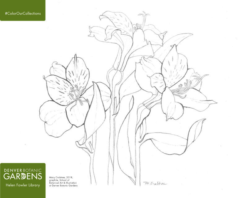 Inspire Your Kids With Free Printable Coloring Pages From Museums And Libraries Learning Liftoff