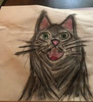 Hannah's drawing of a cat
